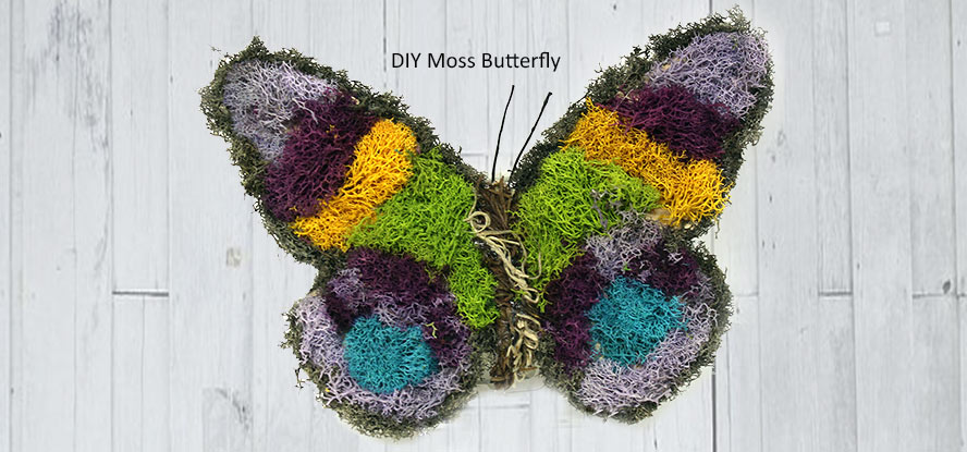 Moss Butterfly Project